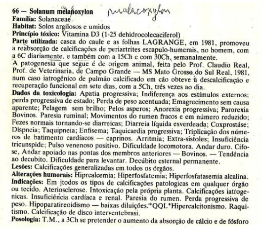 2. boericke solanum